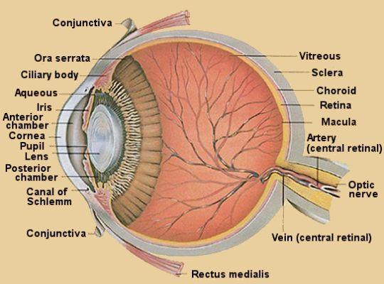 Eyehuman
